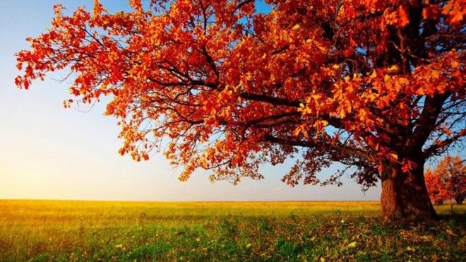 Landscape-View-with-Tree-and-Red-Leaves-600x375